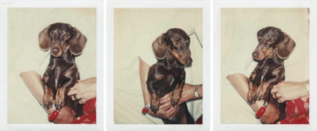 Teckel andy warhol retratos de perros