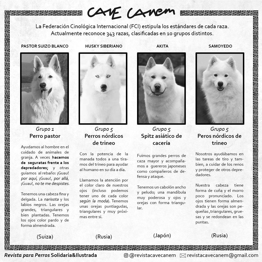 Perros Blancos