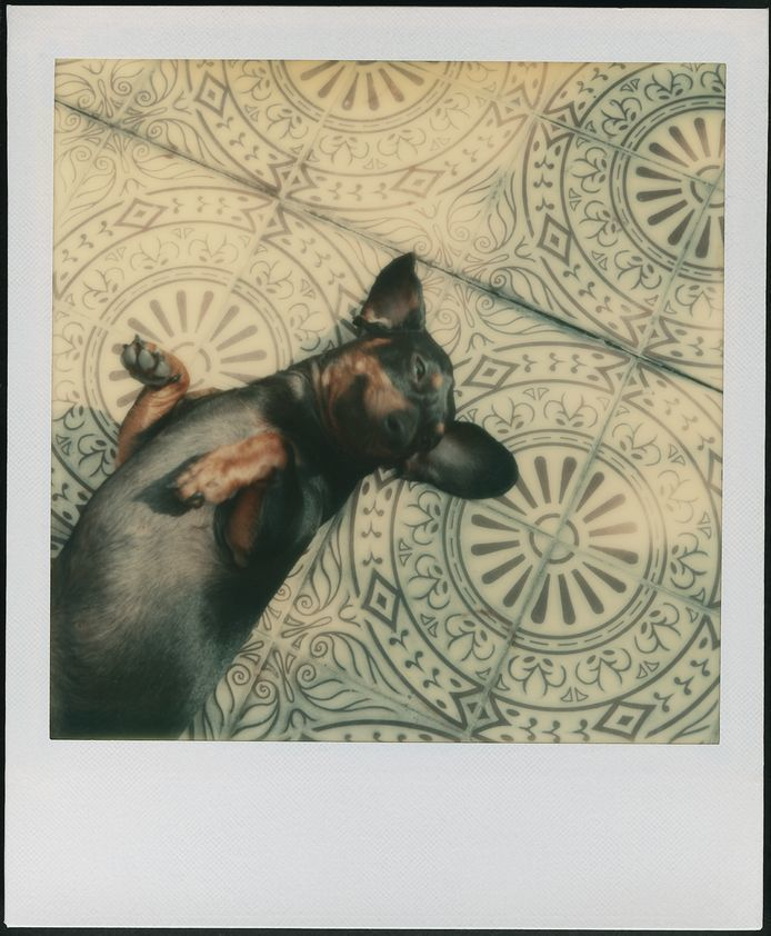 Archie perro Andy Warhol