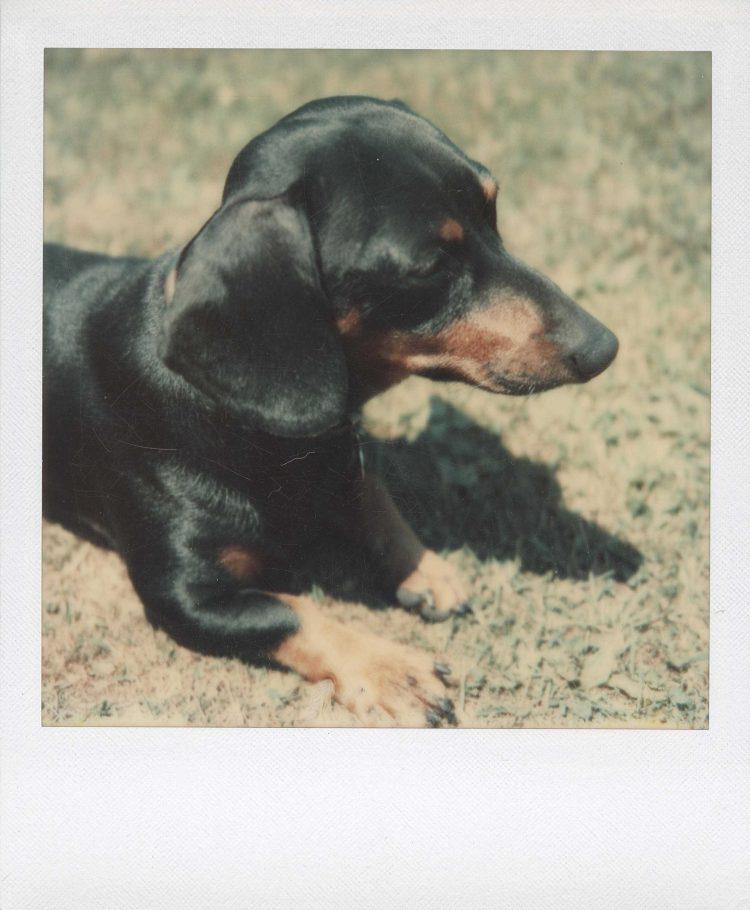 archie perro warhol