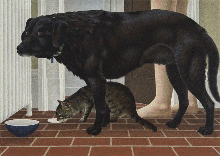perro y gato alex colville