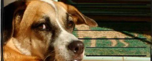 Gamberrada canina