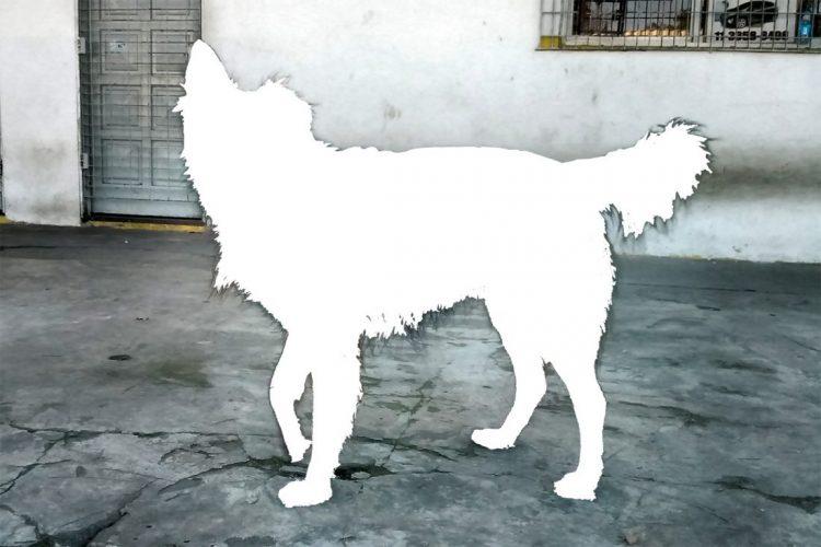 ezequiel slafer dog